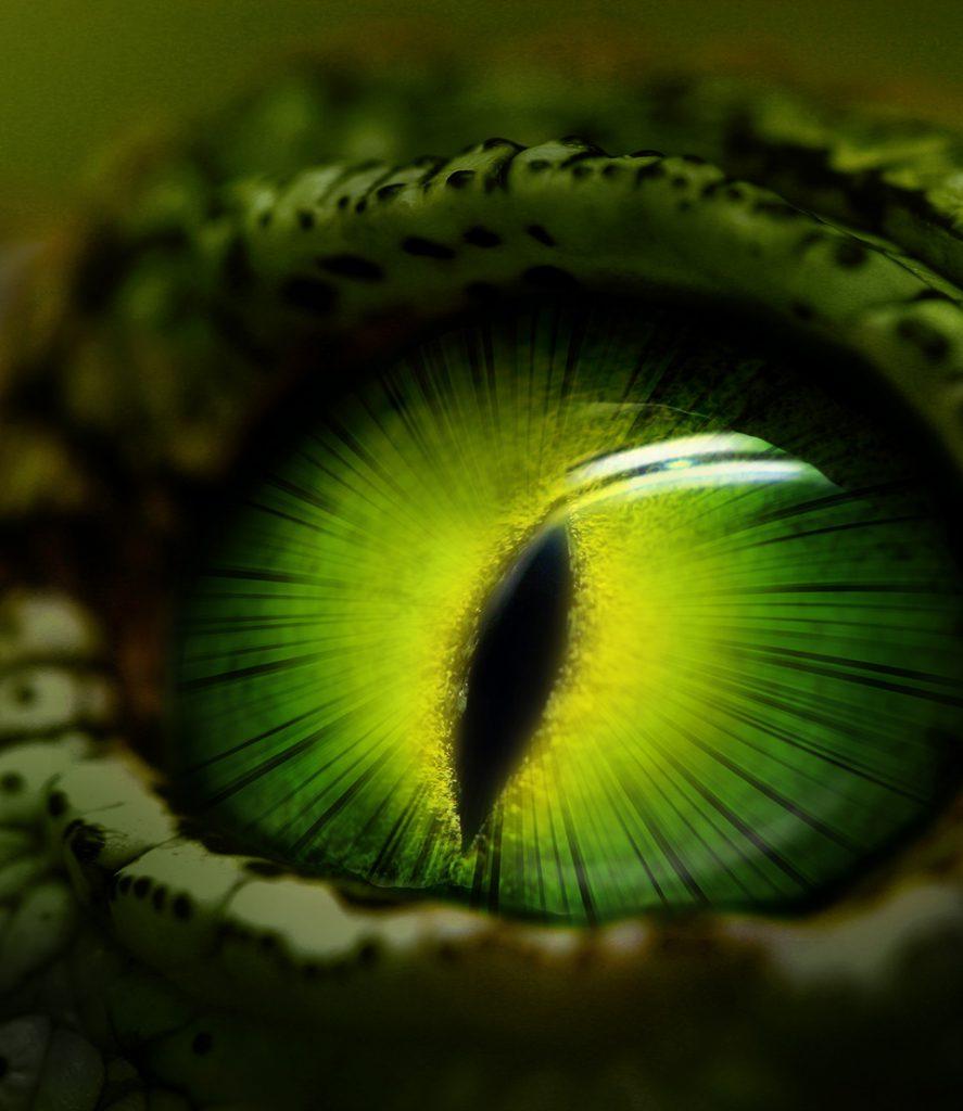 brandcouture Pattex Crocodile power